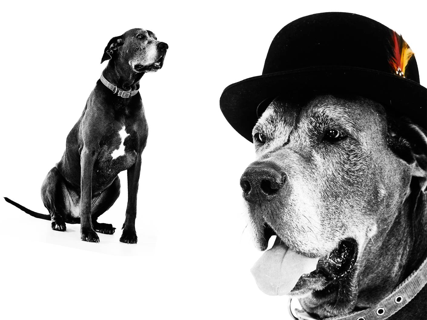 contemporary-pet-portrait-photographer-in-cheshire-and-manchester